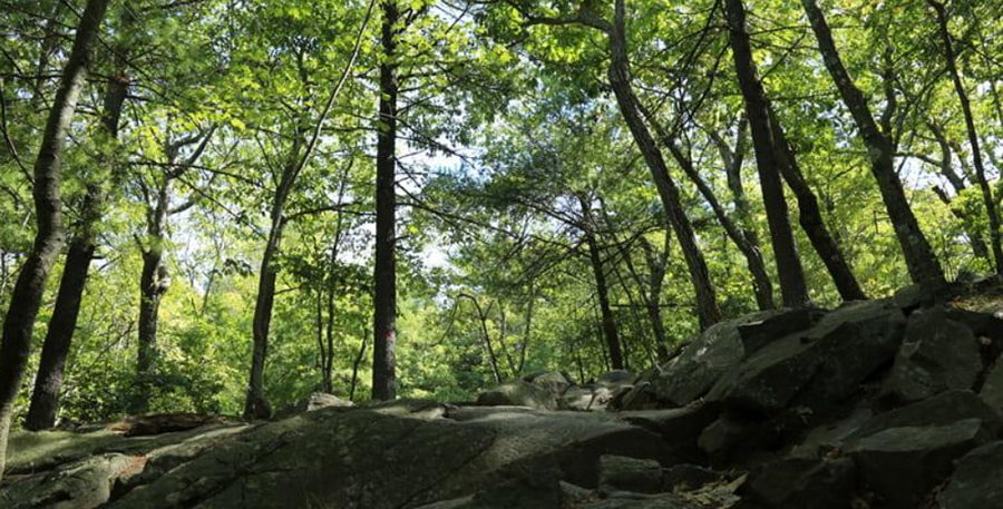 6 Proposal-Worthy Hiking Trails in MA and NH