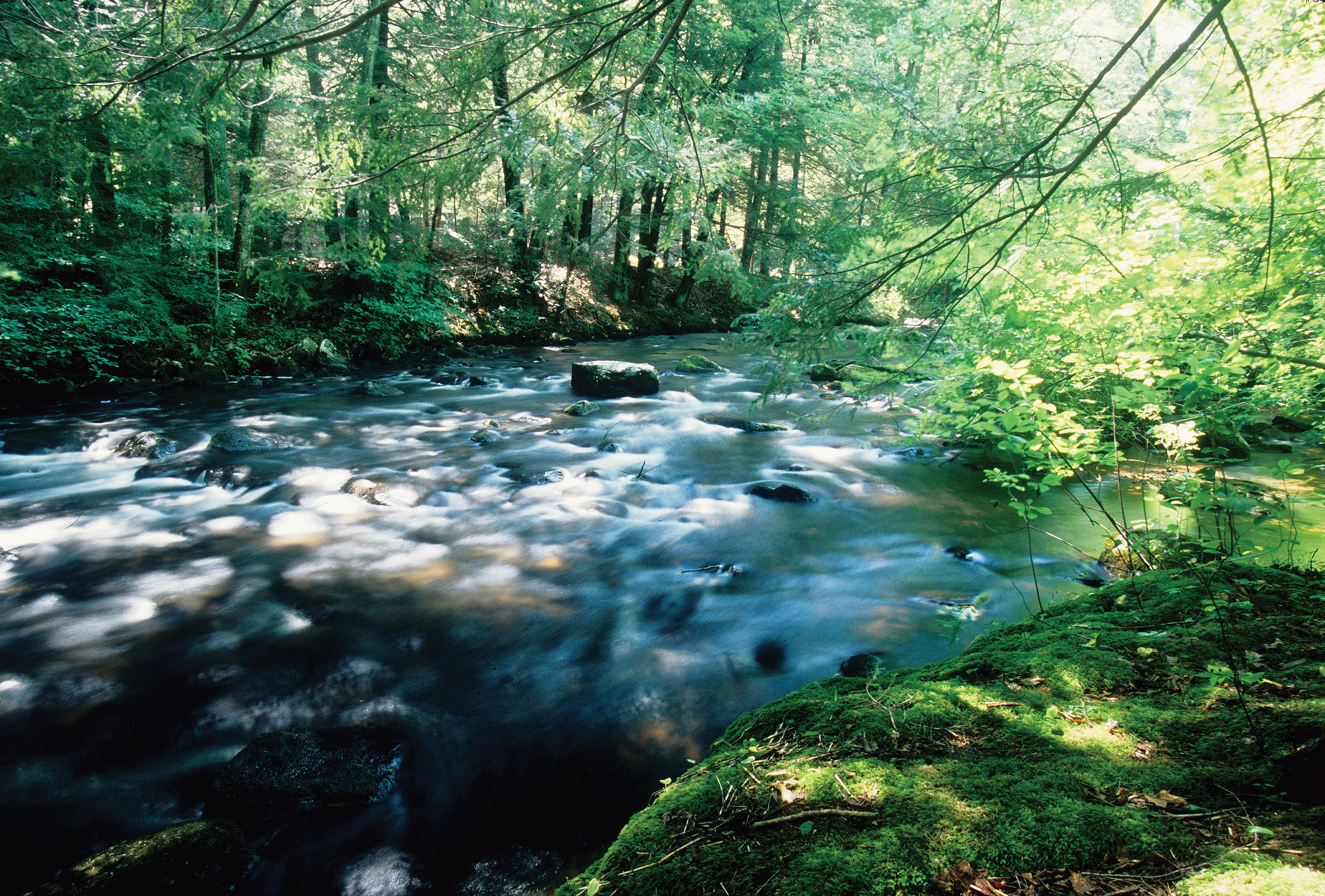 Quaboag River - Quinebaug Woods - Long's Jewelers Hike Proposal
