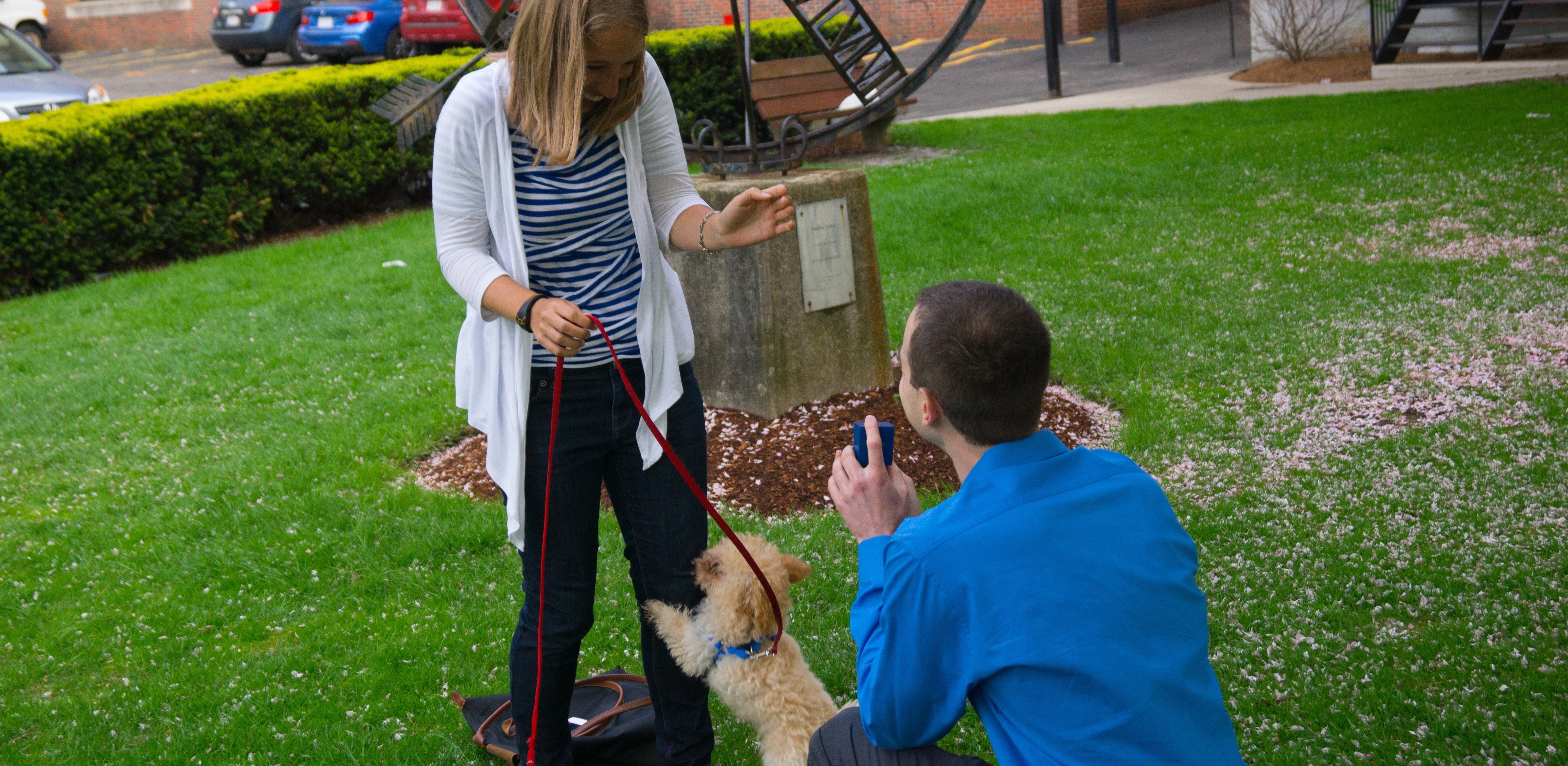 Ideas For Using Dogs in Proposals