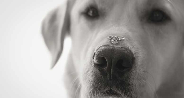 6 Adorable Ways To Include A Dog In Your Proposal
